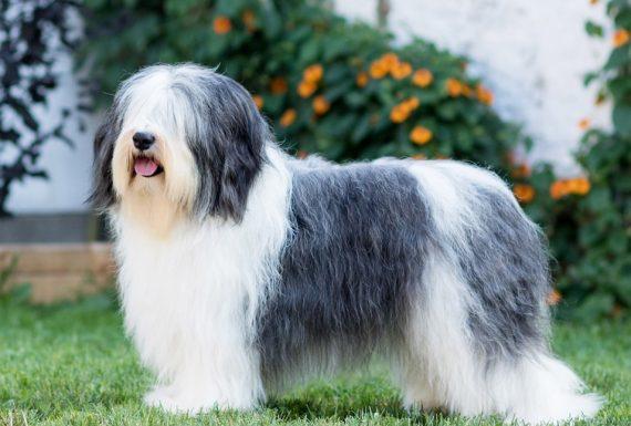 VALESKA GEWINNT BEI DER INTERNATIONAL DOG SHOW IN TSCHECHIEN