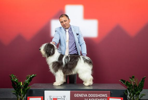 Ponwood´s Woody Great succes in Genf (CH)