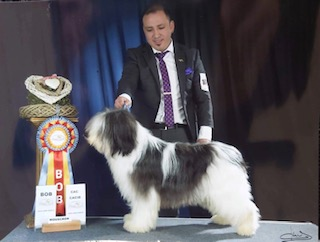 Ponwood´s Woody – Best in Show 3 Youth in Mouscron (B).